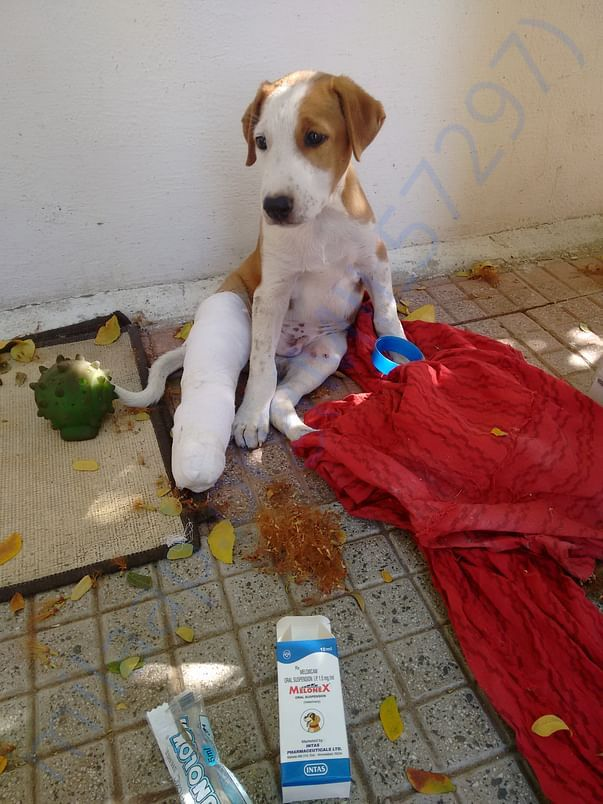 Rescue and treatment to injured and ill stray animals.