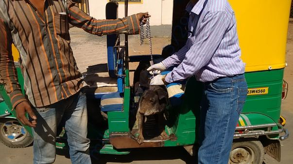 Rescue and treatment to injured and ill stray animals/birds.