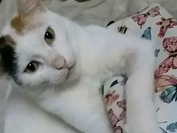 Help Angel Recover From CKD