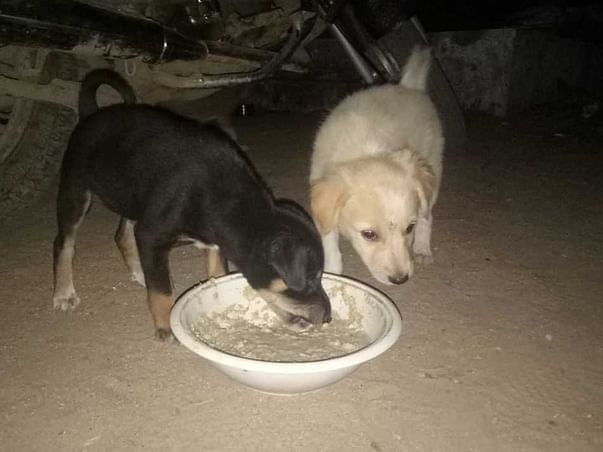 Help Me To Feed Stray Animals