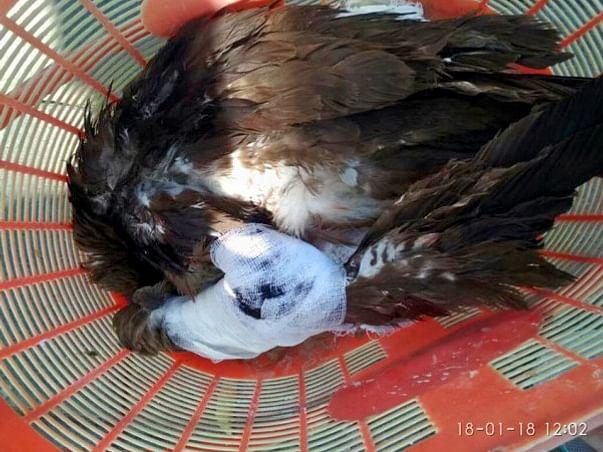 Save Birds Campaign, Uttarayan-2019