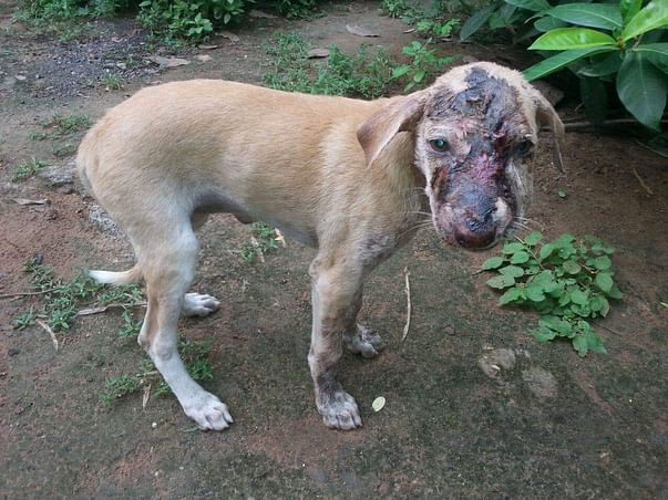 Help Us To Rescue Street Animals
