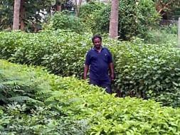 Help Saranalayam Charitable Trust Grow more Plants