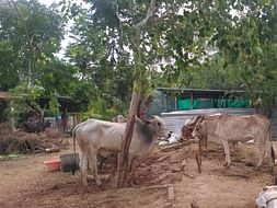 Help Gokula Krishna Goshala