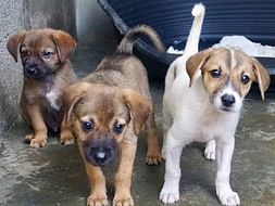 HELP TO BUILD SHELTER FOR STRAY ANIMALS AND SUPPORT THEIR TREATMENT
