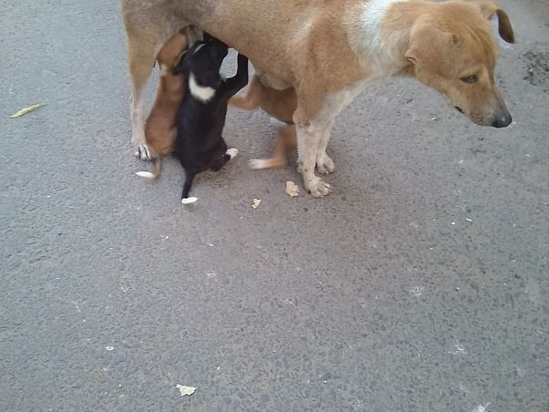 Help 3 Stray Cats And A Stray Dog Get Sterilized