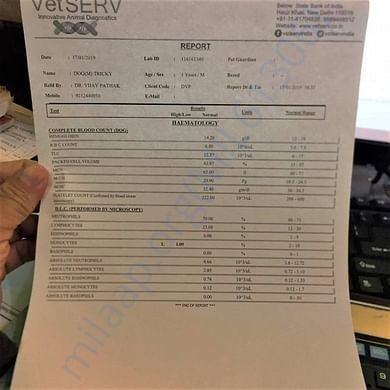 Tricky's blood work report.