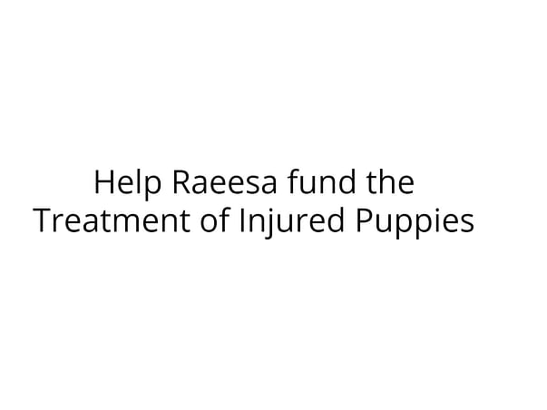 Help Raeesa fund the Treatment of Injured Puppies