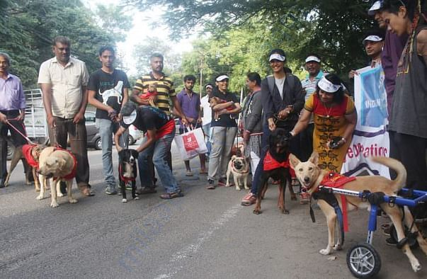 Our Paralysed Dogs Participating in a Rally!