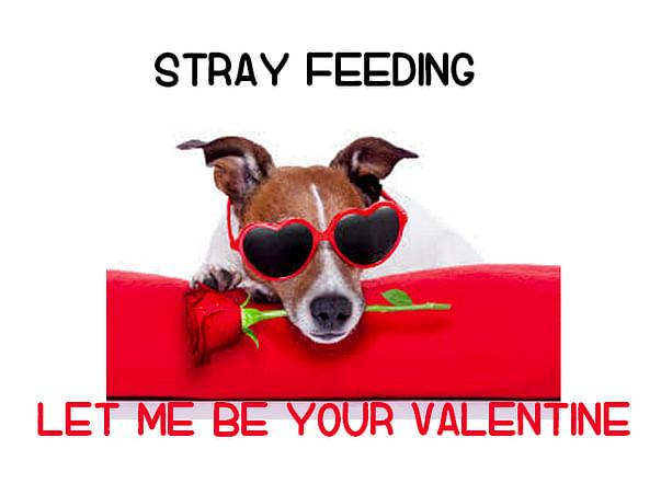 Feeding Stray Dogs On Valentines