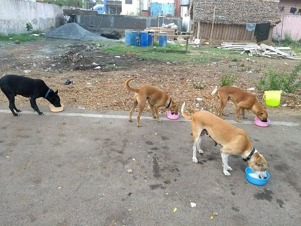 Please help Scooby's Animal Care Build an animal shelter in Chennai