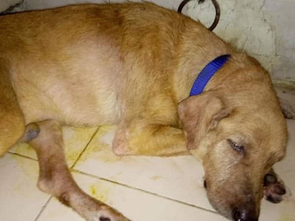 Help me fund the treatment of my rescue Rambo