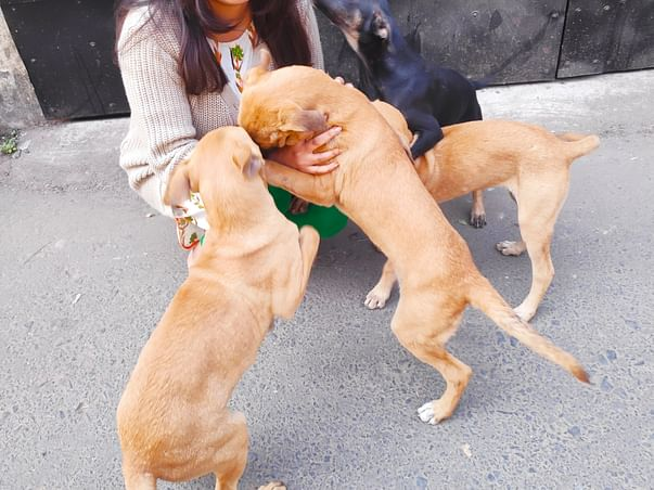 Join Me To Treat Street Dogs And Puppies