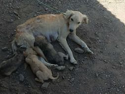 OM SAI RAM PLEASE HELP ME TO FEED STRAY DOGS AND COWS IN SHIRDI.