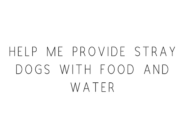 Help Me Provide Stray Dogs With Food and Water