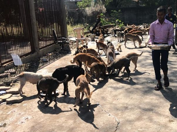 Save Animals Be Human: Fundraising For Animal Shelter