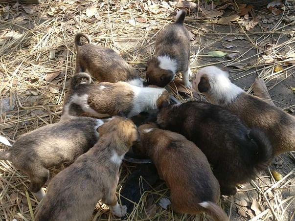 Help Cinnamon and her Pups!
