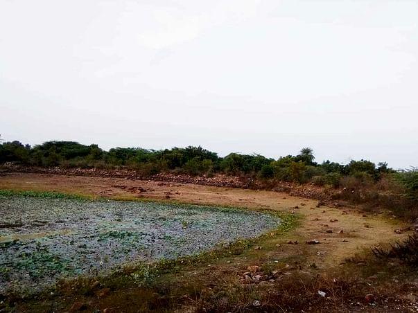Pond Restoration Project
