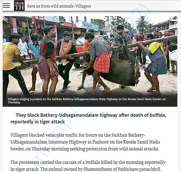 The Hindu - New on wild attack in Sulthan Bathery