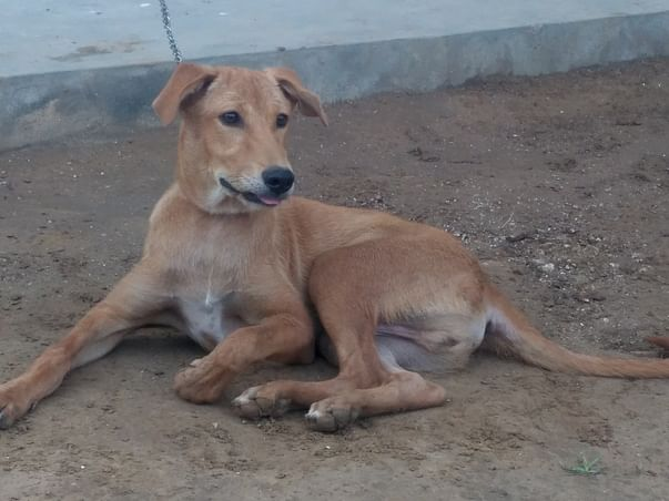 Help The Street Dog To Fight Back And Live
