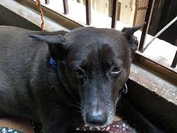 Help Me Save My Dog