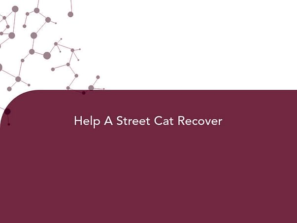 Help A Street Cat Recover