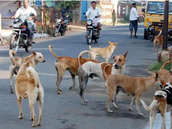 Help for street dogs