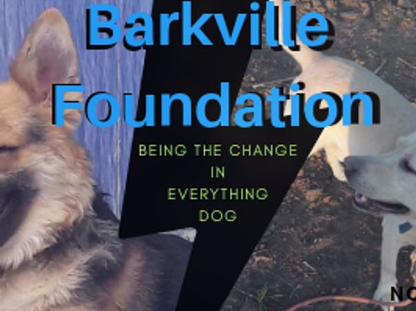 99 Barkville Expansion