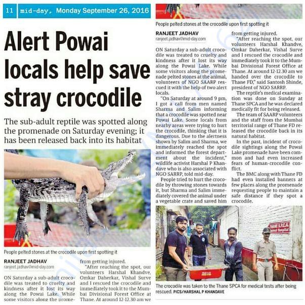 Crocodile Rescue from area near Powoi Lake, Mumbai