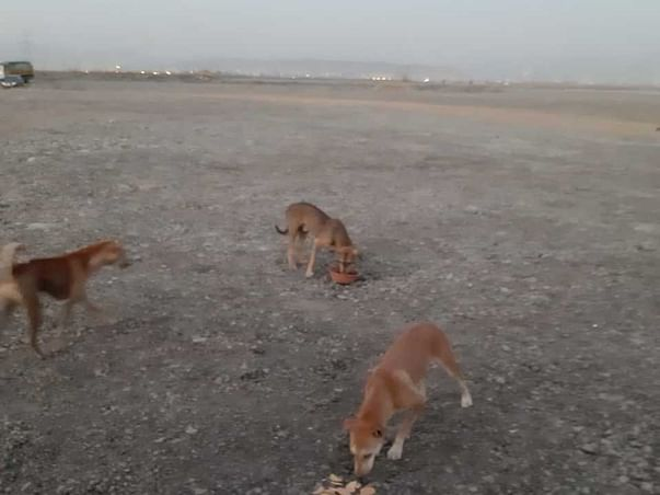 Over 450 Dogs are dying at Navi Mumbai Airport Site! Help them!