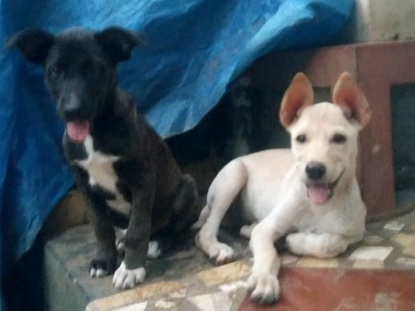 Cherai Tails -empowering pups for life. vaccinate- sterilise-home
