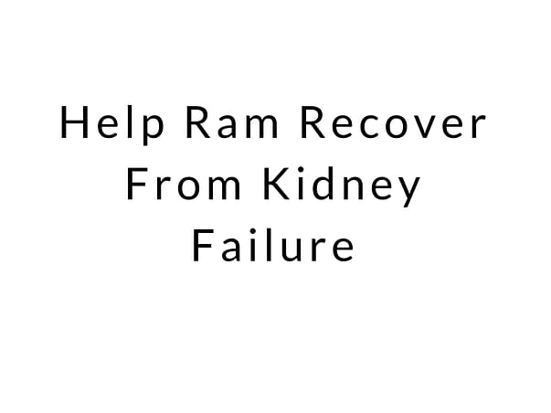 Help Ram Recover From Kidney Failure