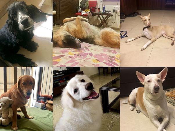 Support Om's Dog Training