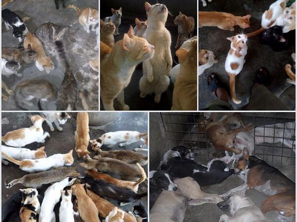 Help 350+ Animals Get Water This Summer