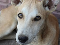 Help These Stray Pups Fly To Their Forever Homes In USA