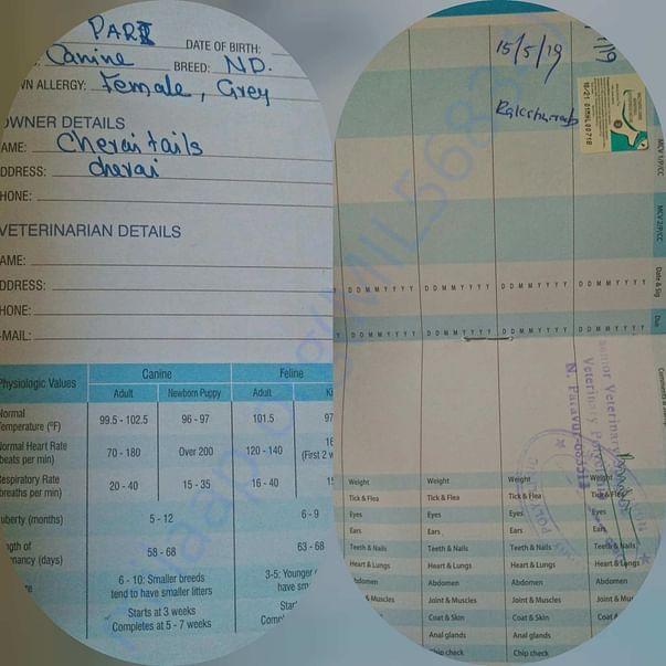 Pari health document (had multi vaccine got her rabies)