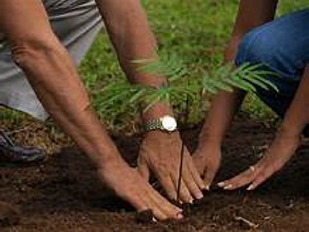 Help Us on our mission of Afforestation