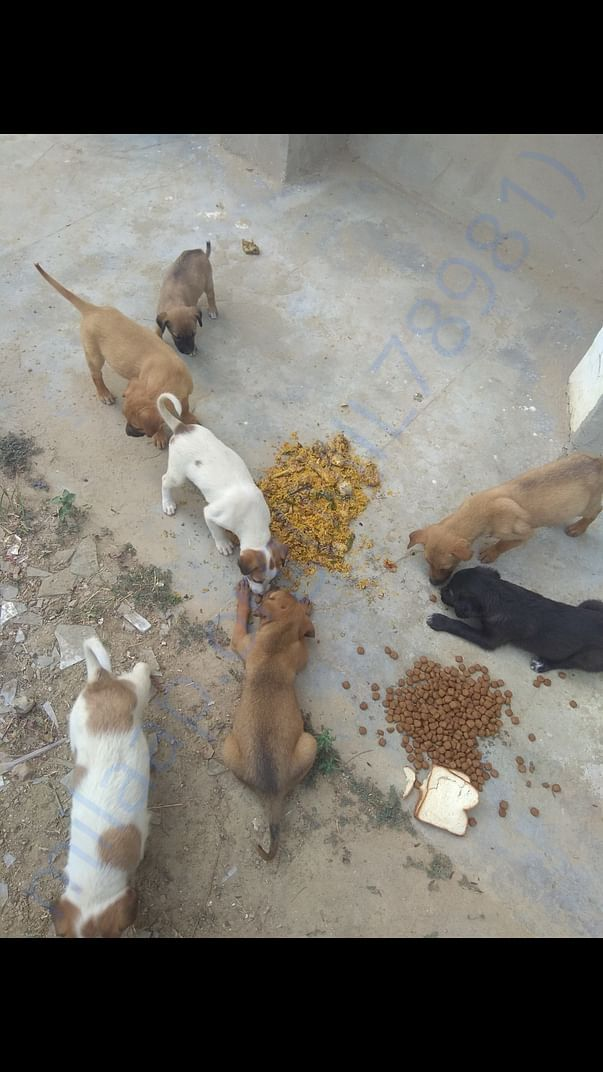 Feed strays every day.