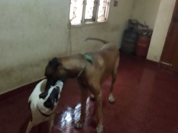 Help me feed 25 stray dogs a day.