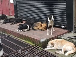 Help us Save Indian Street Dogs