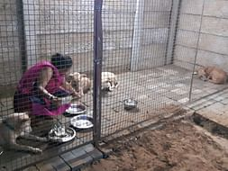 Construction and renovation of our Stray Dog Home DUGGU'S SHELTER HOME