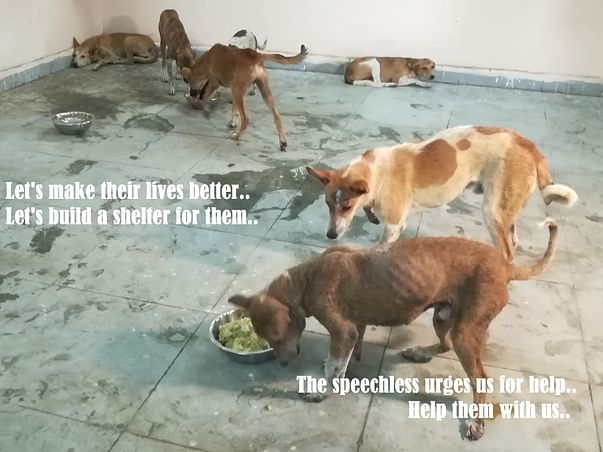Donate to build animal shelter and hospital