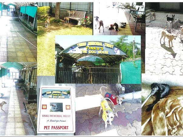 HELP US BUILD A SHELTER HOME FOR STREET DOGS AND BIRDS.