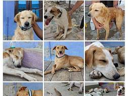 Monthly sponsor for Shelter Animals