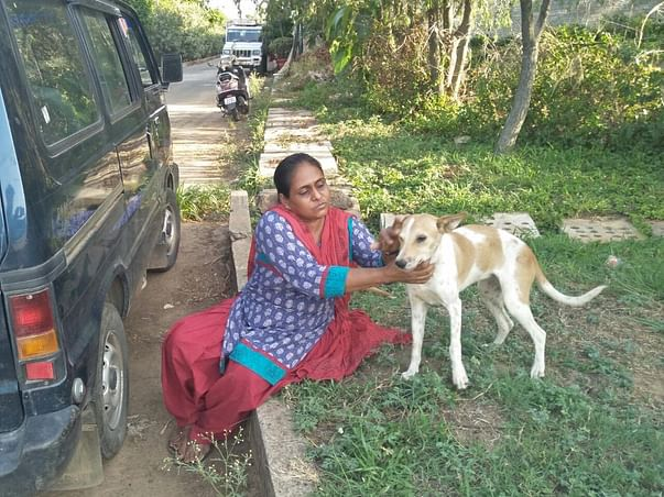 Help us for Animal Shelter