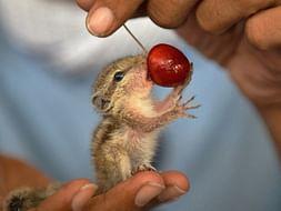 Save Nature , Save Animals