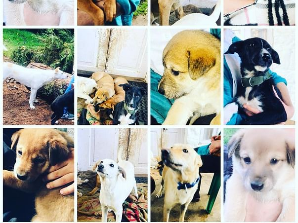 Help KSPCA 'S ABC/ ARV Program For Street Dogs in Kodaikanal&Dindigul