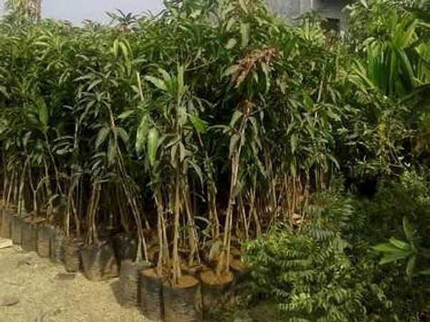 Help Mother Earth🌎 TREE PLANTATION 🌳🌴