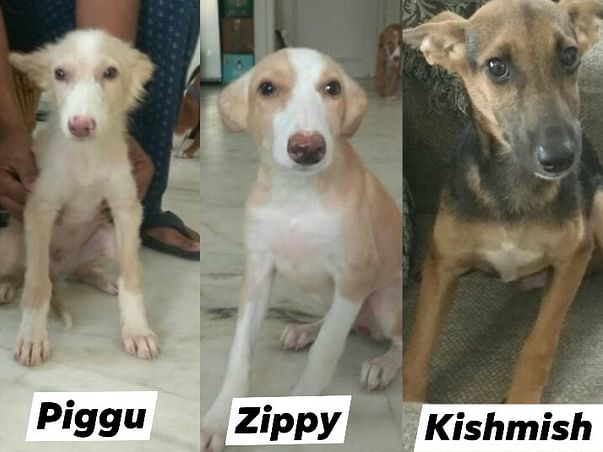 Help Piggu, Zippy, Kishmish fly to New Jersey, USA