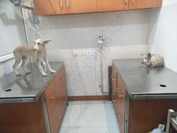During tick fever treatment at Anand's Pet Clinic